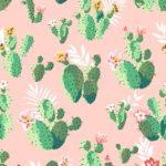 Kaktusz illusztráció