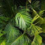 Pálmalevél erdő